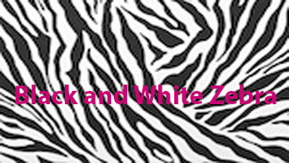 Balck-and-White-Zebra